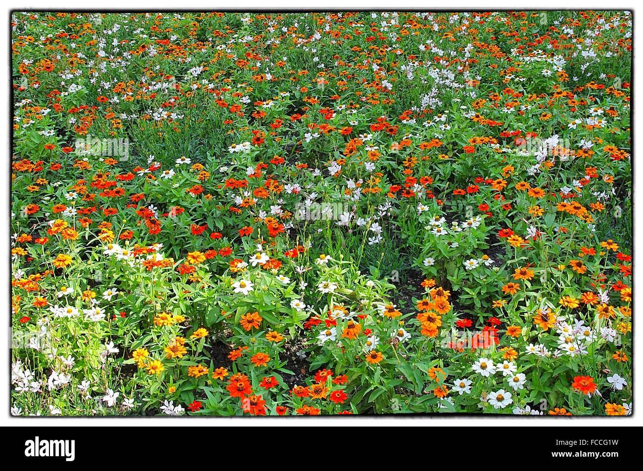 Décors de fleurs colorées Photo Stock
