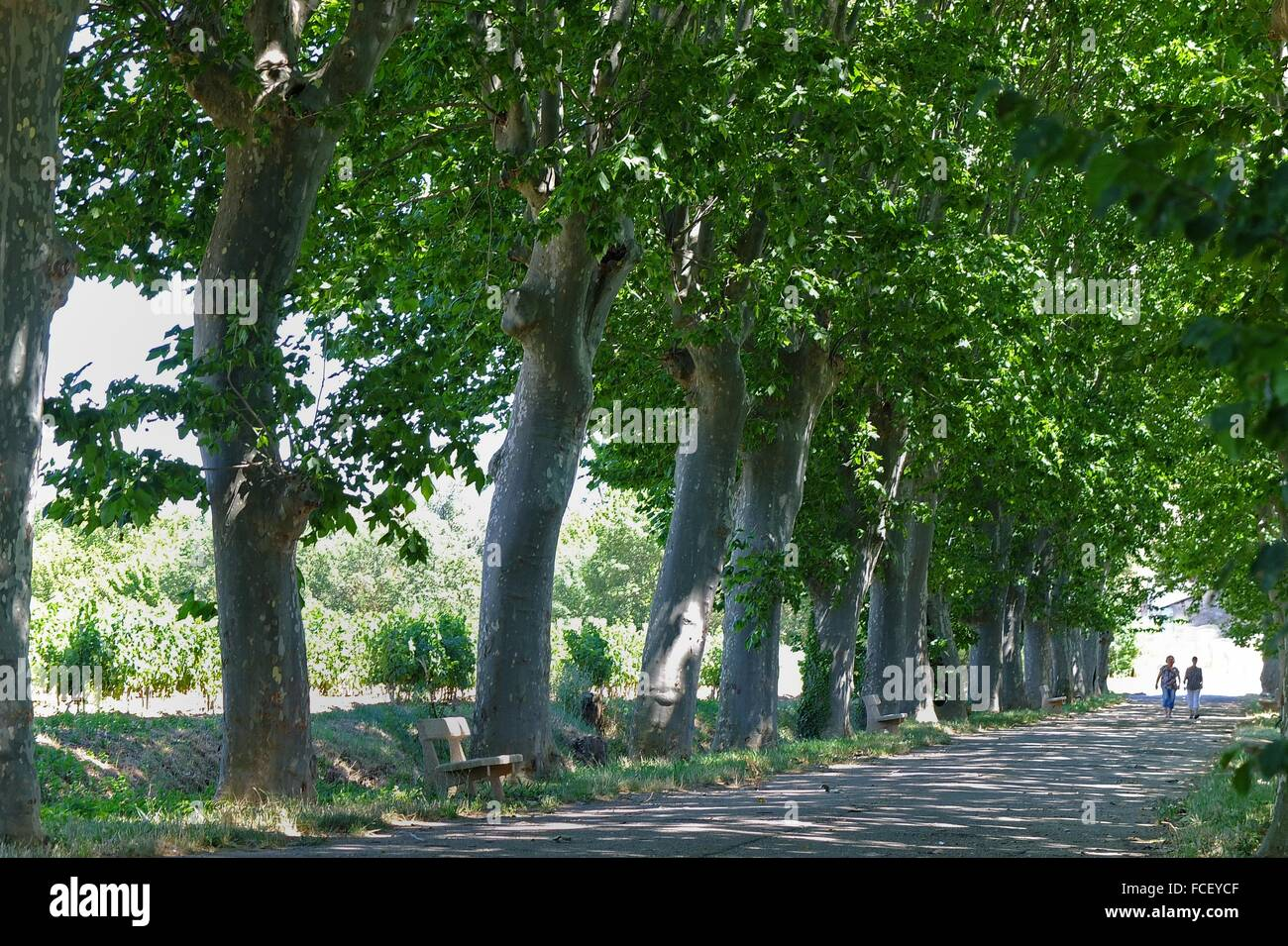 deux femmes descendre un platane tons arbre allee banque d'images
