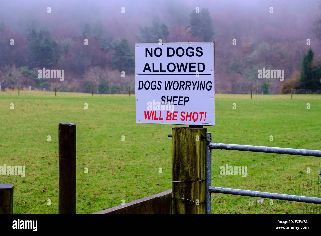 Chiens non admis avertissement agricole ferme Royaume-Uni Photo Stock