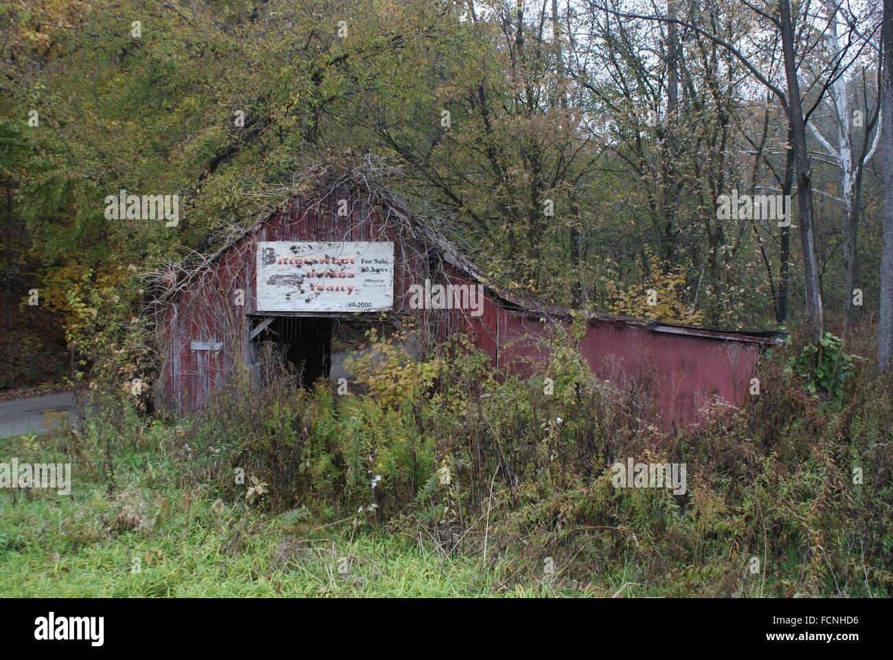 Abandonner une vieille grange couverte de mauvaises herbes et de vignes. Photo Stock