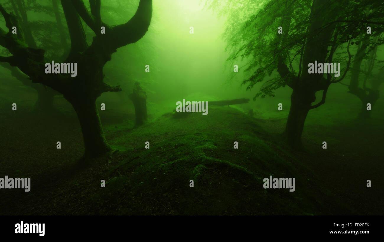 Peur profonde forêt avec arbres sombre silhouette Photo Stock