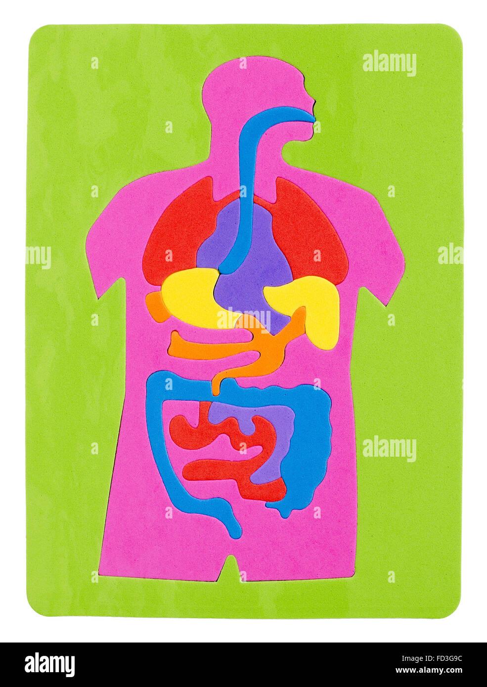 Système digestif Puzzle Photo Stock