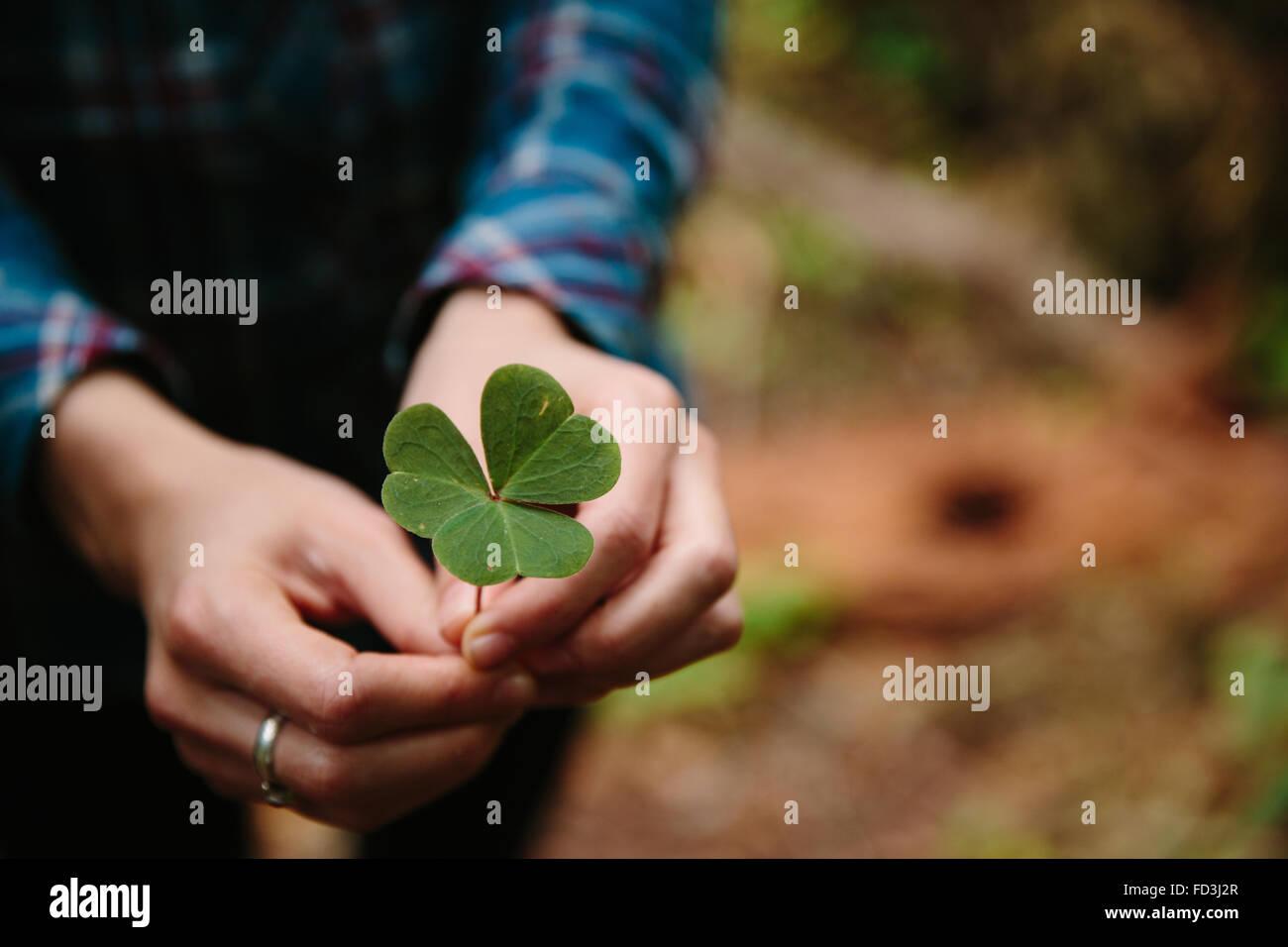 Clover Leaf femme détient dans ses mains Photo Stock