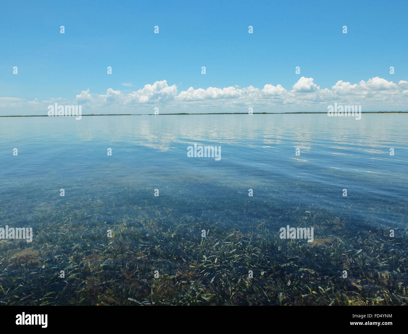 Mer peu profonde avec des algues poussant sur fond luxuriante Photo Stock