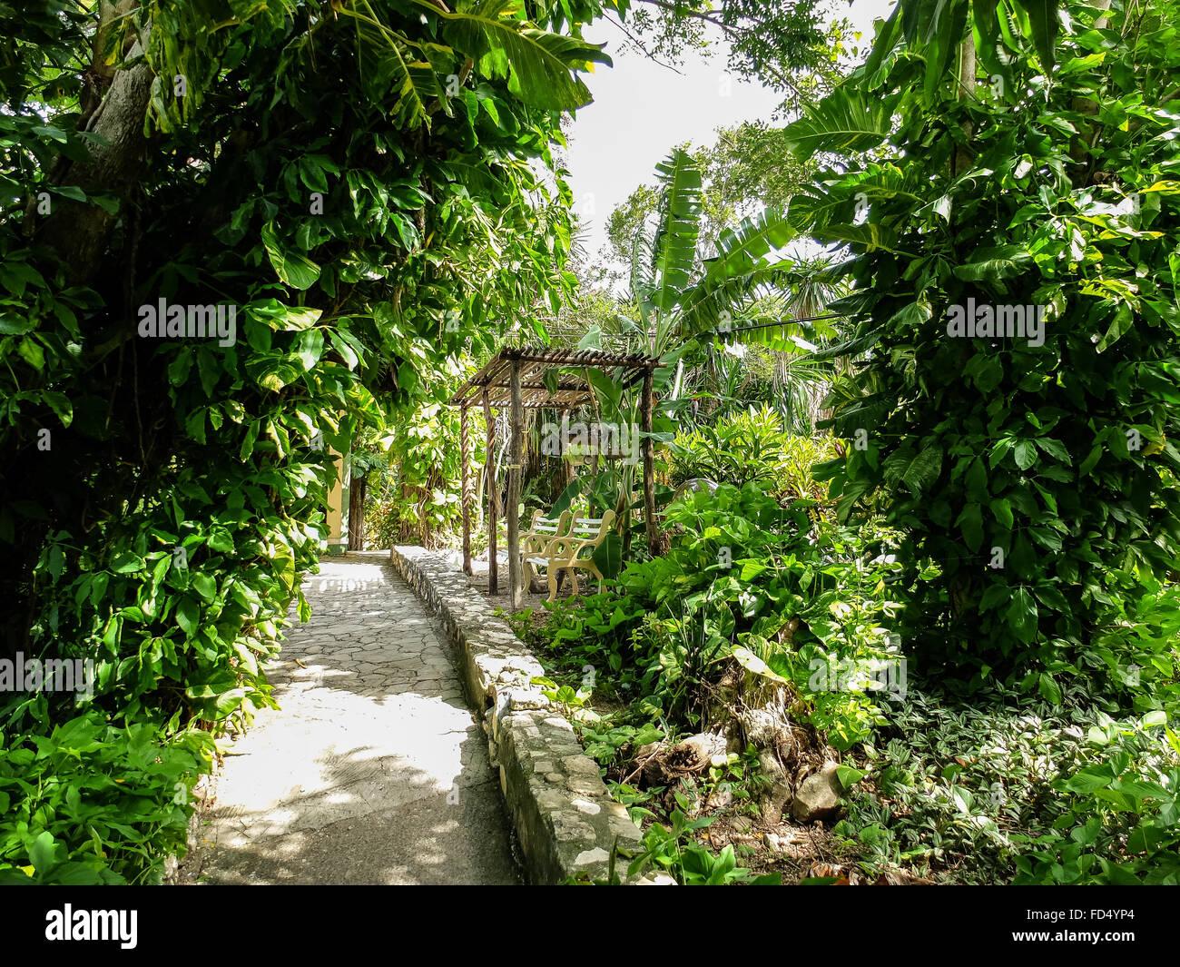Sentier de jardin luxuriant Photo Stock