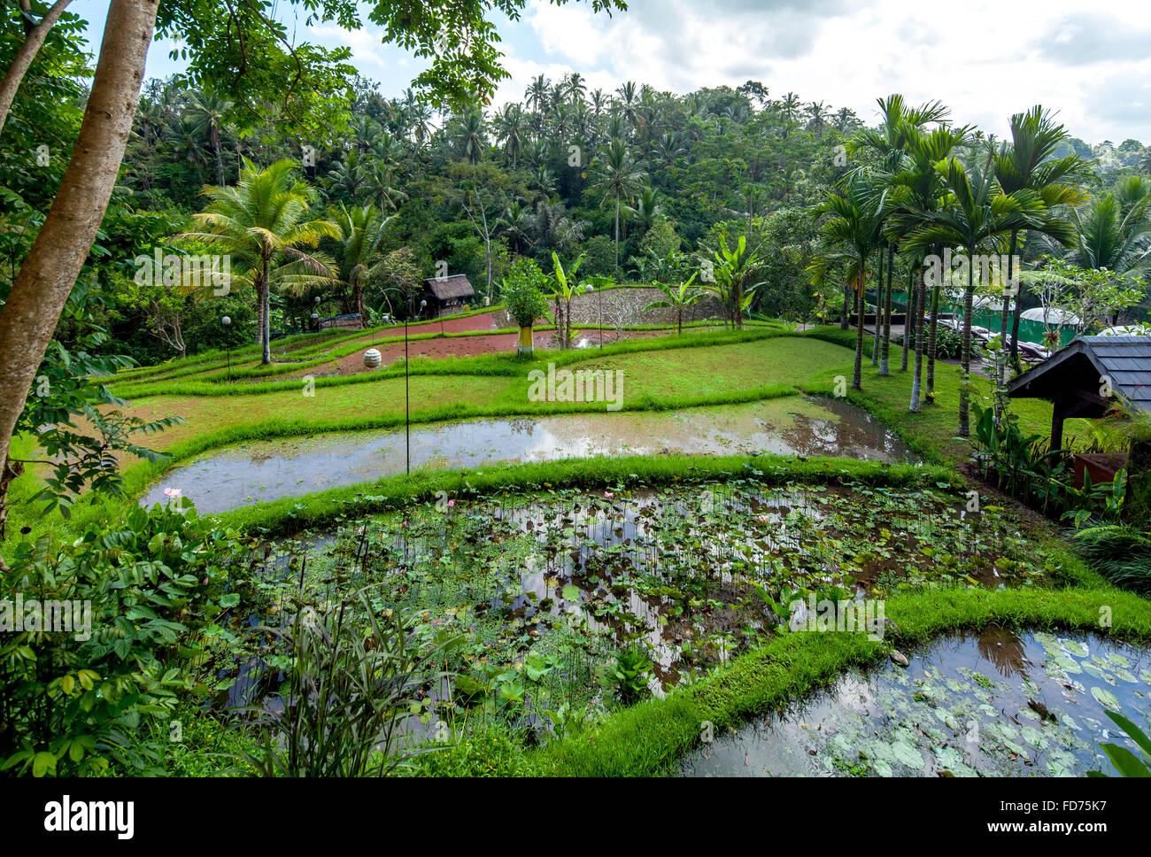 Hôtel complexe dans un bon hôtel de ville de Ubud, palmiers, surfaces de l'eau, Ubud, Bali, Indonésie, Photo Stock