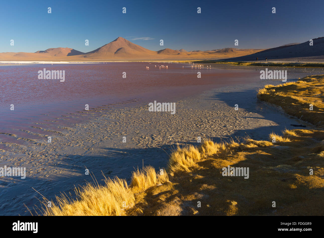 "Vue grand angle de la ""Laguna Colorada"" multicolores, Salt Lake avec des flamants roses, sur le chemin Photo Stock"