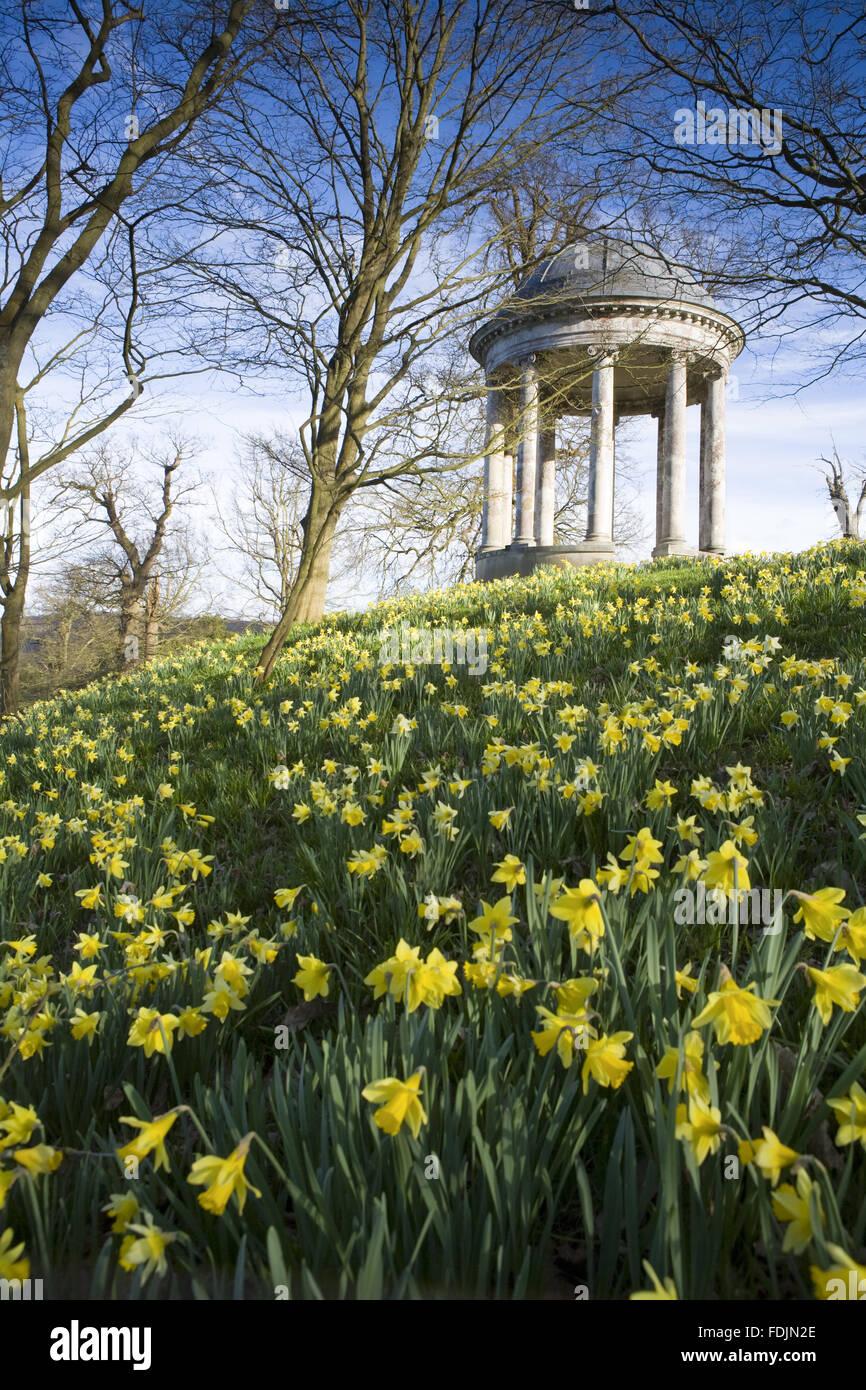 La rotonde construite en 1766, et des jonquilles dans le parc à Petworth House, West Sussex. La rotonde ionique peut avoir été conçu par Matthew Brettingham probablement inspiré par Vanbrugh's rotondes. Banque D'Images