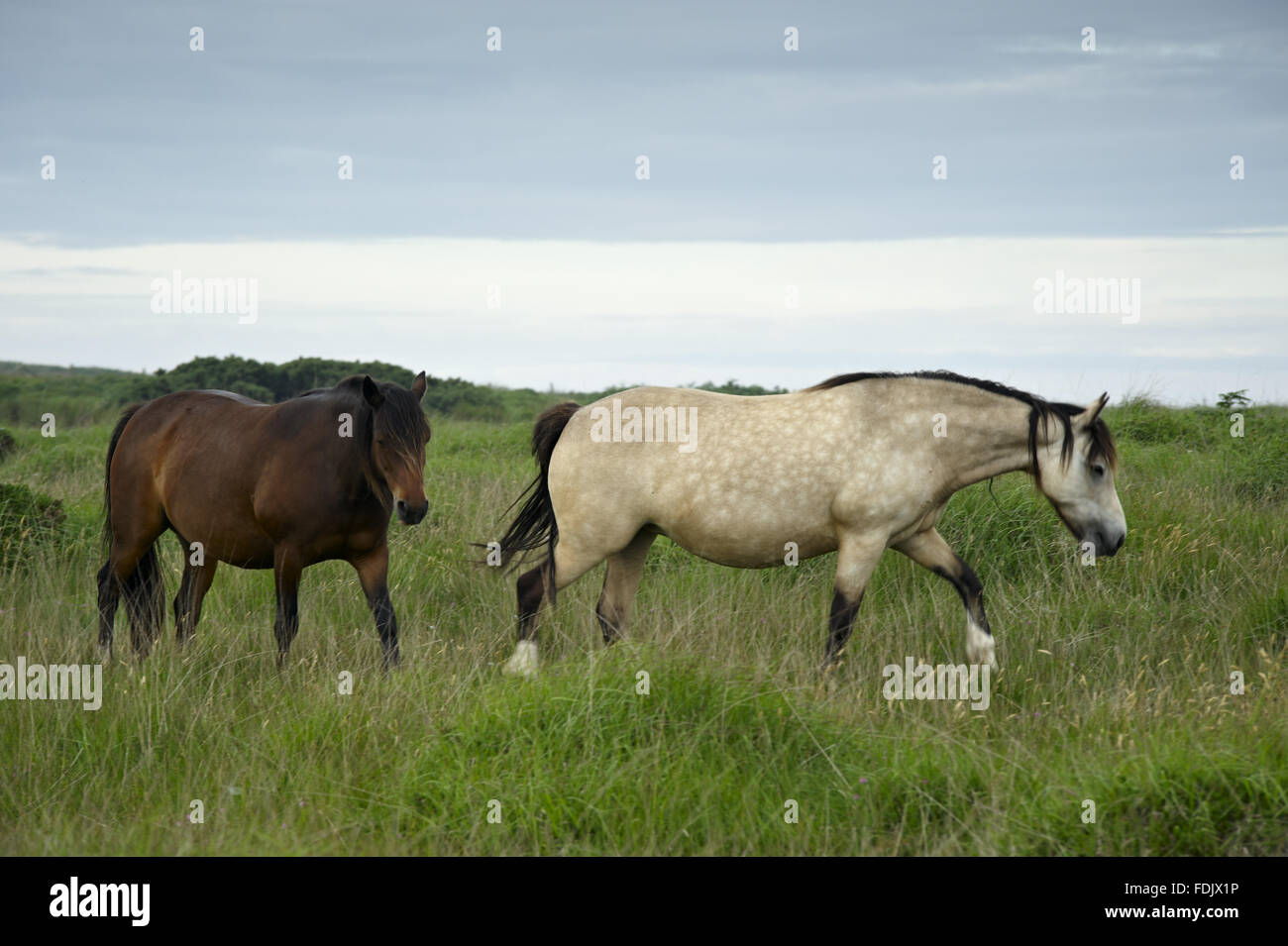 Vitesse datant du Sud Devon site anti-datation