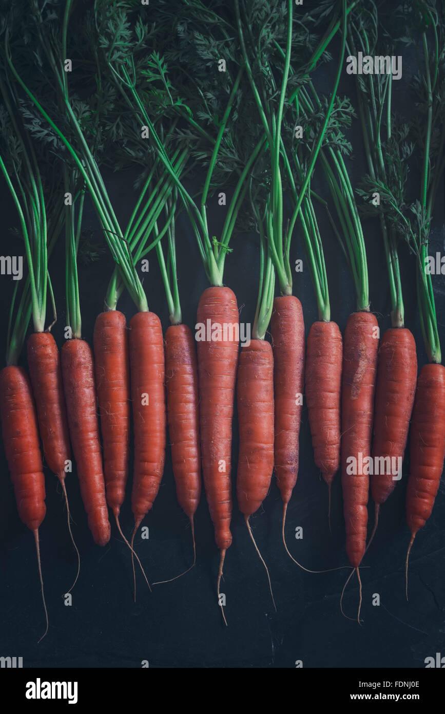 Quelques belles carottes biologiques fraîchement cueillies Photo Stock