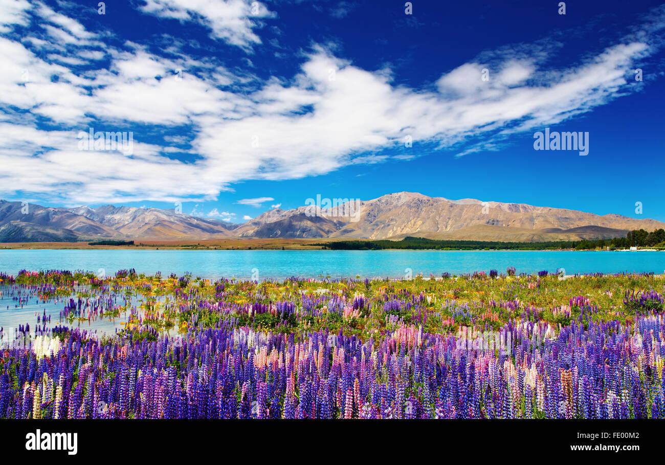 Paysage de montagne avec lac et fleurs, Nouvelle-Zélande Photo Stock