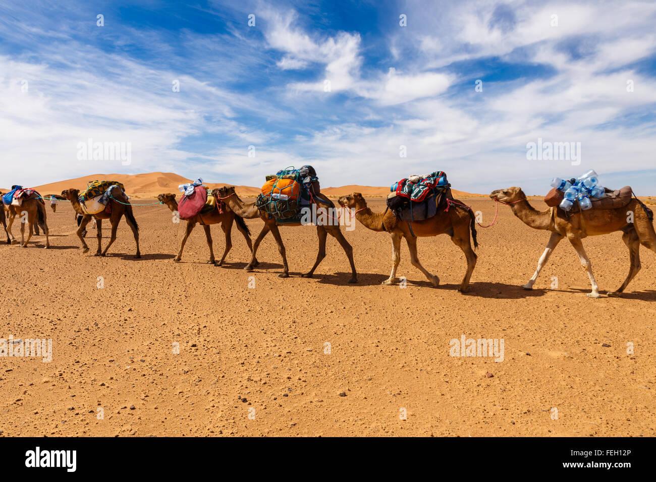 Caravane du commerce dans le désert Photo Stock
