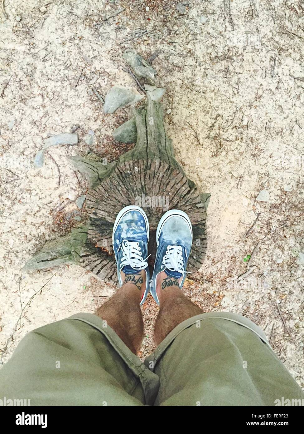 La section basse de l'Homme portant des chaussures sur souche d'arbre fissuré Photo Stock