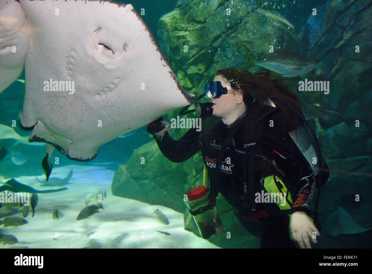 Scuba Diver squid pour nourrir une stingray sud Ripley's aquarium à toronto Photo Stock