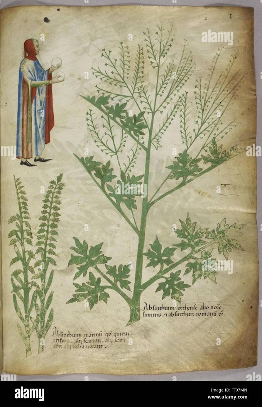 Illustration de Tractatus de Herbis Illustration de Tractatus de Herbis Banque D'Images