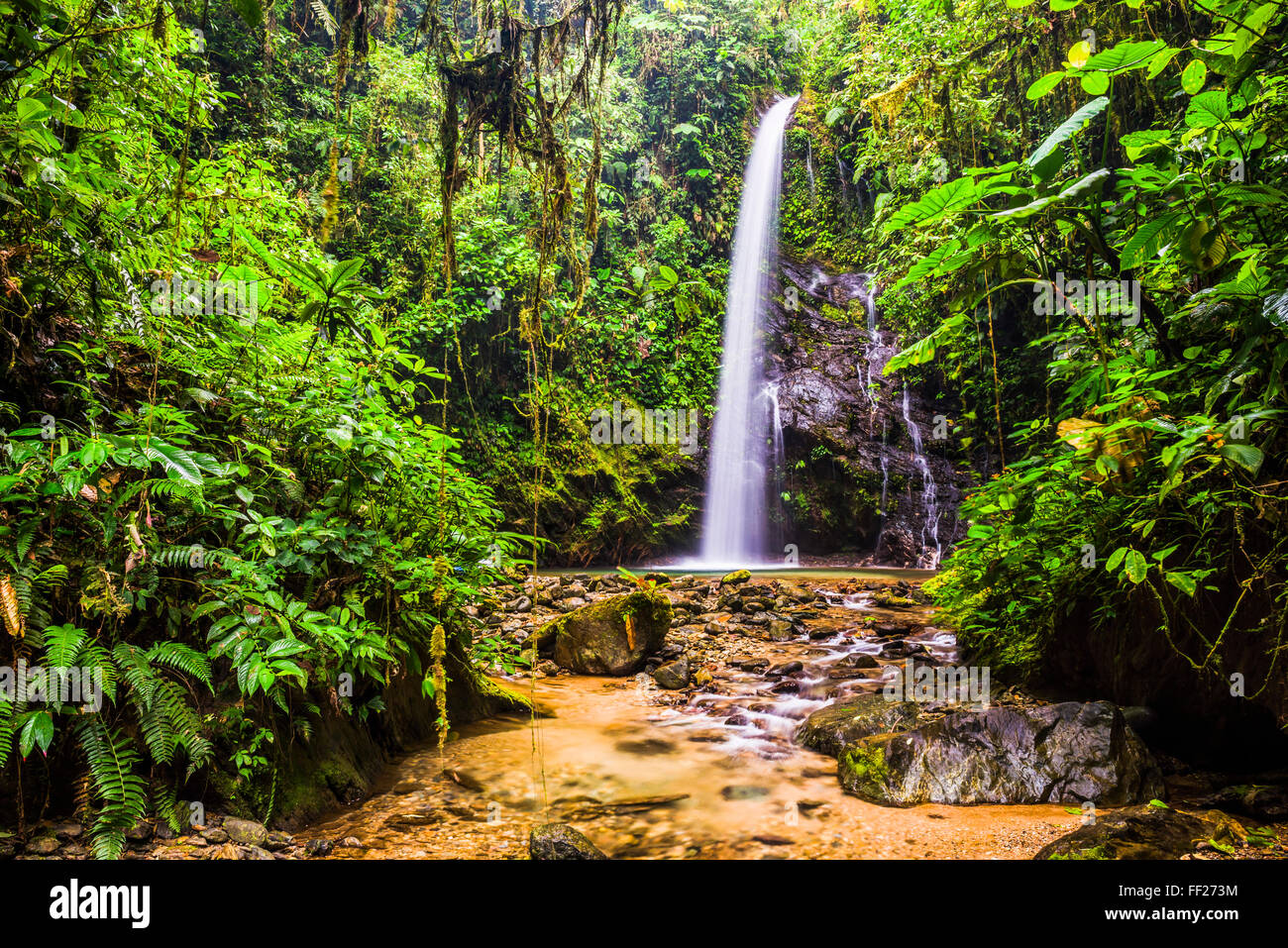 WaterfaRMRM San Vincente dans une zone d'jungRMe caRMRMed CRMoud Mashpi Forest dans le Choco Rainforest, Equateur, Photo Stock
