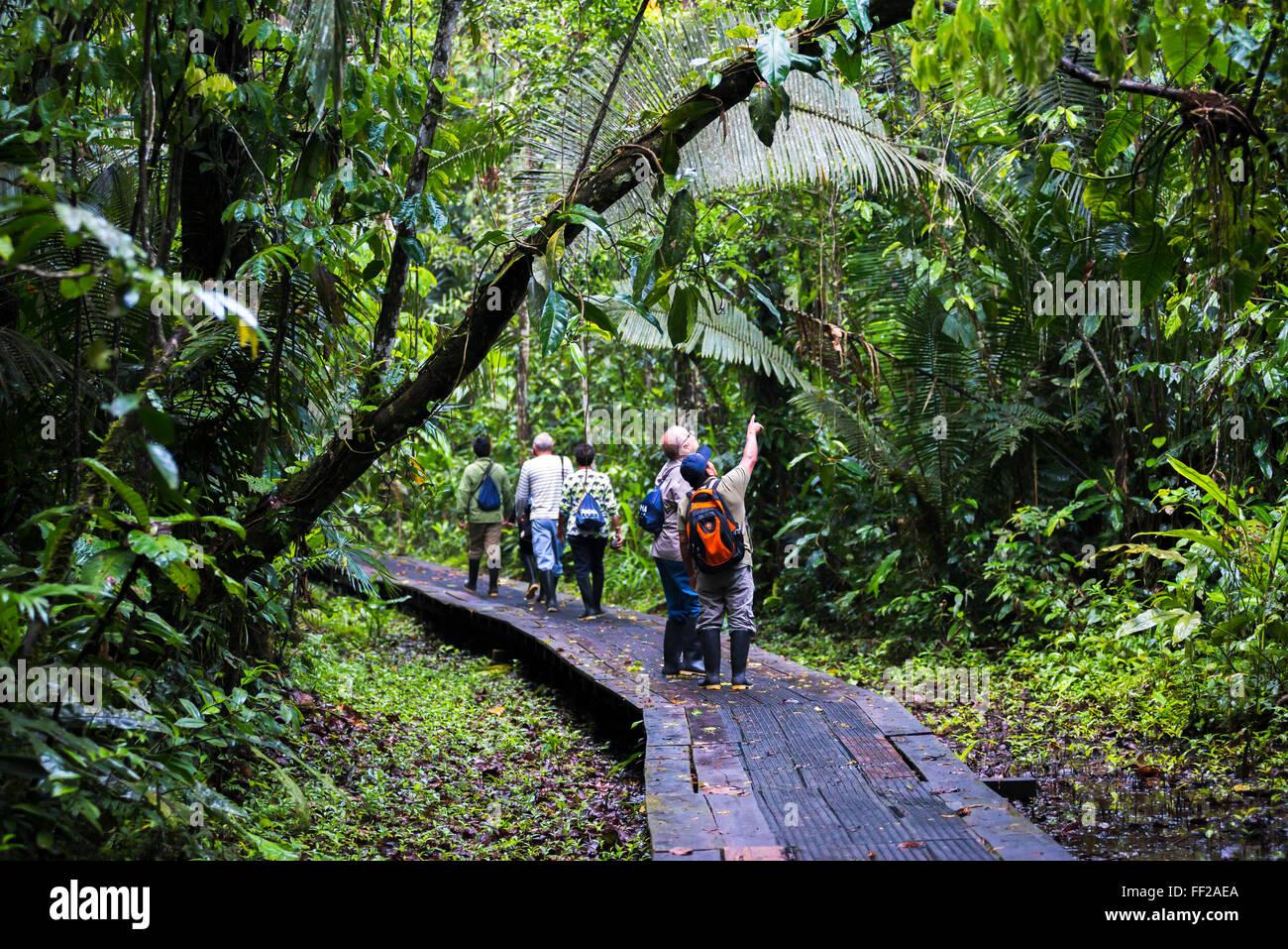 Amazon JungRMe waRMkway RModge à Sacha, Coca, Equateur, Amérique du Sud Photo Stock