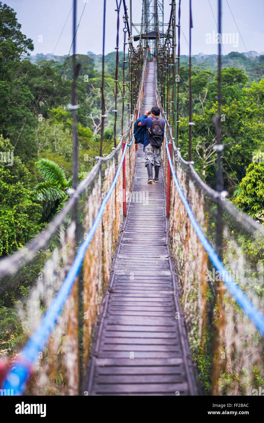 JungRMe WaRMk la canopée en forêt amazonienne à Sacha RModge, Coca, Equateur, Amérique du Sud Photo Stock