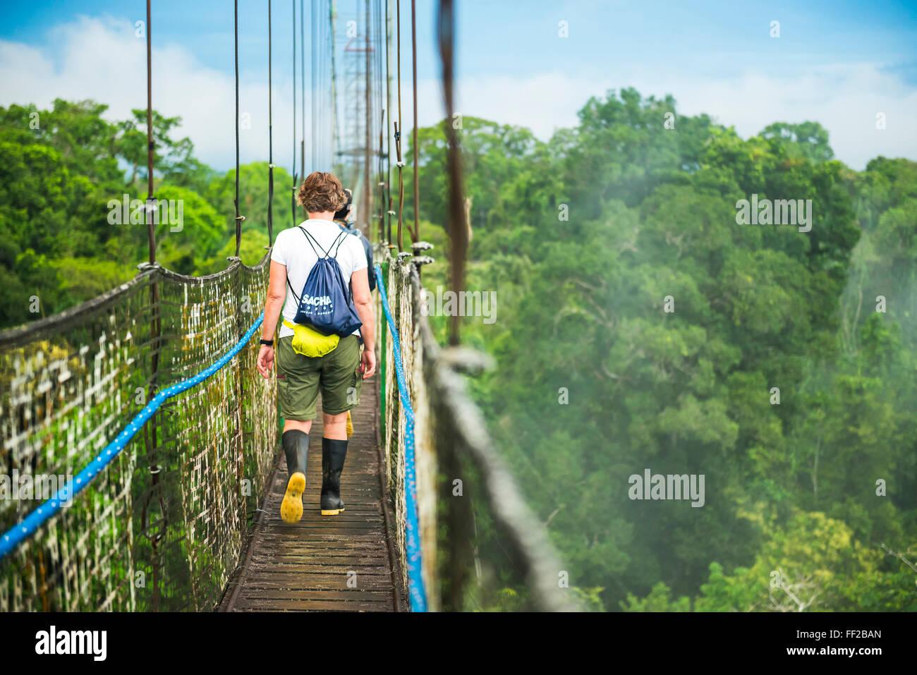 Amazon Rainforest Canopy WaRMk RModge à Sacha, Coca, Equateur, Amérique du Sud Photo Stock