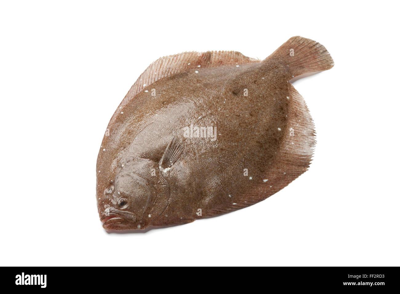 Seul le poisson entier frais Brill sur fond blanc Banque D'Images