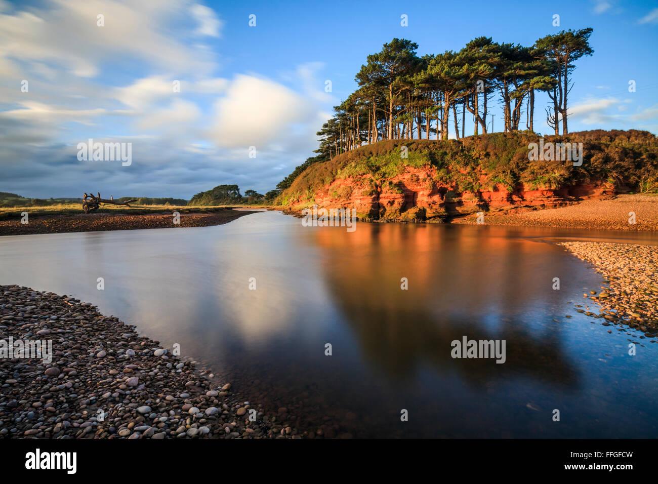 Un stand de l'arbre sur la Loutre de rivière, près de Budleigh Salterton, Devon dans le sud-est. Photo Stock