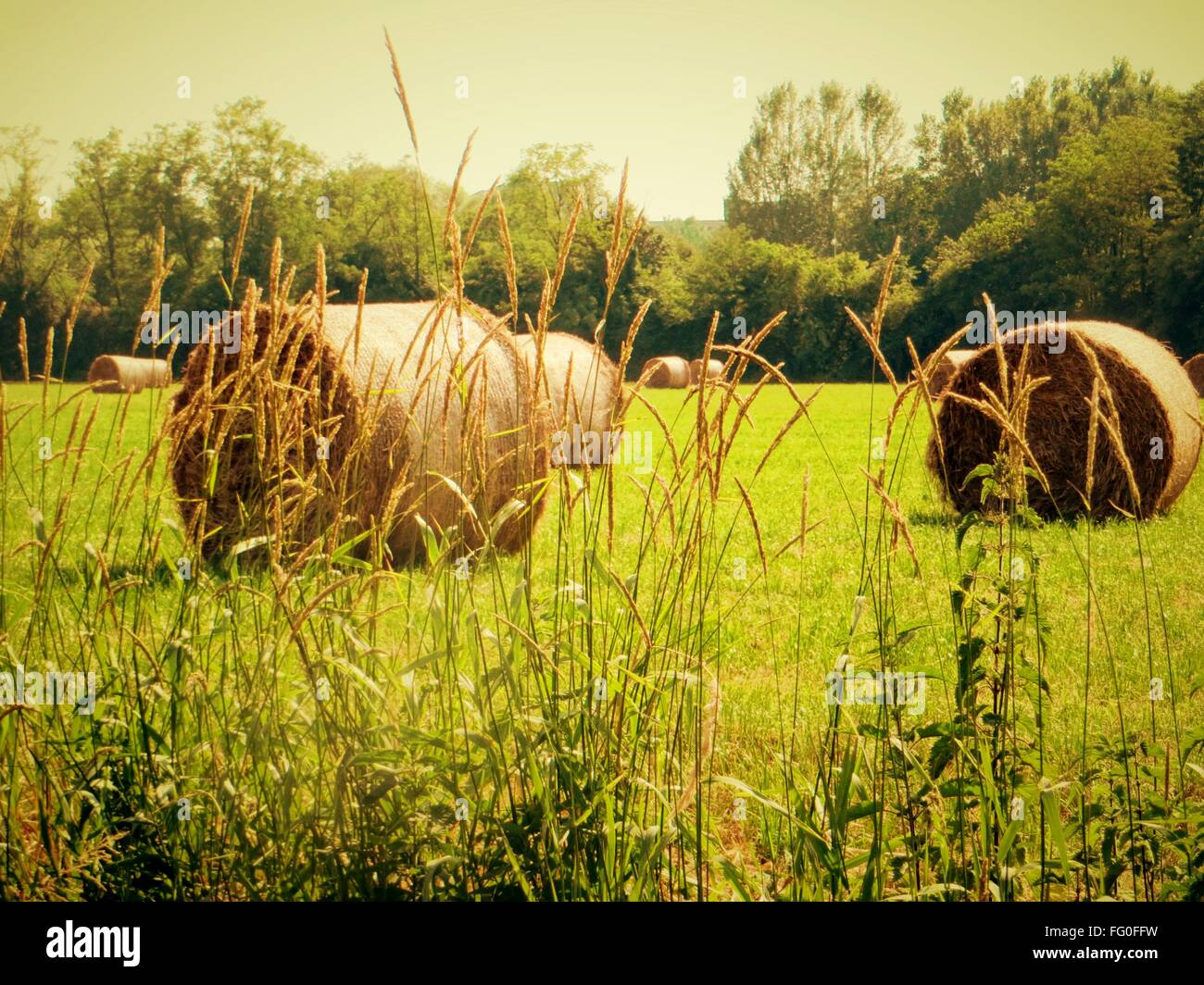 Hay Bales in Field Photo Stock