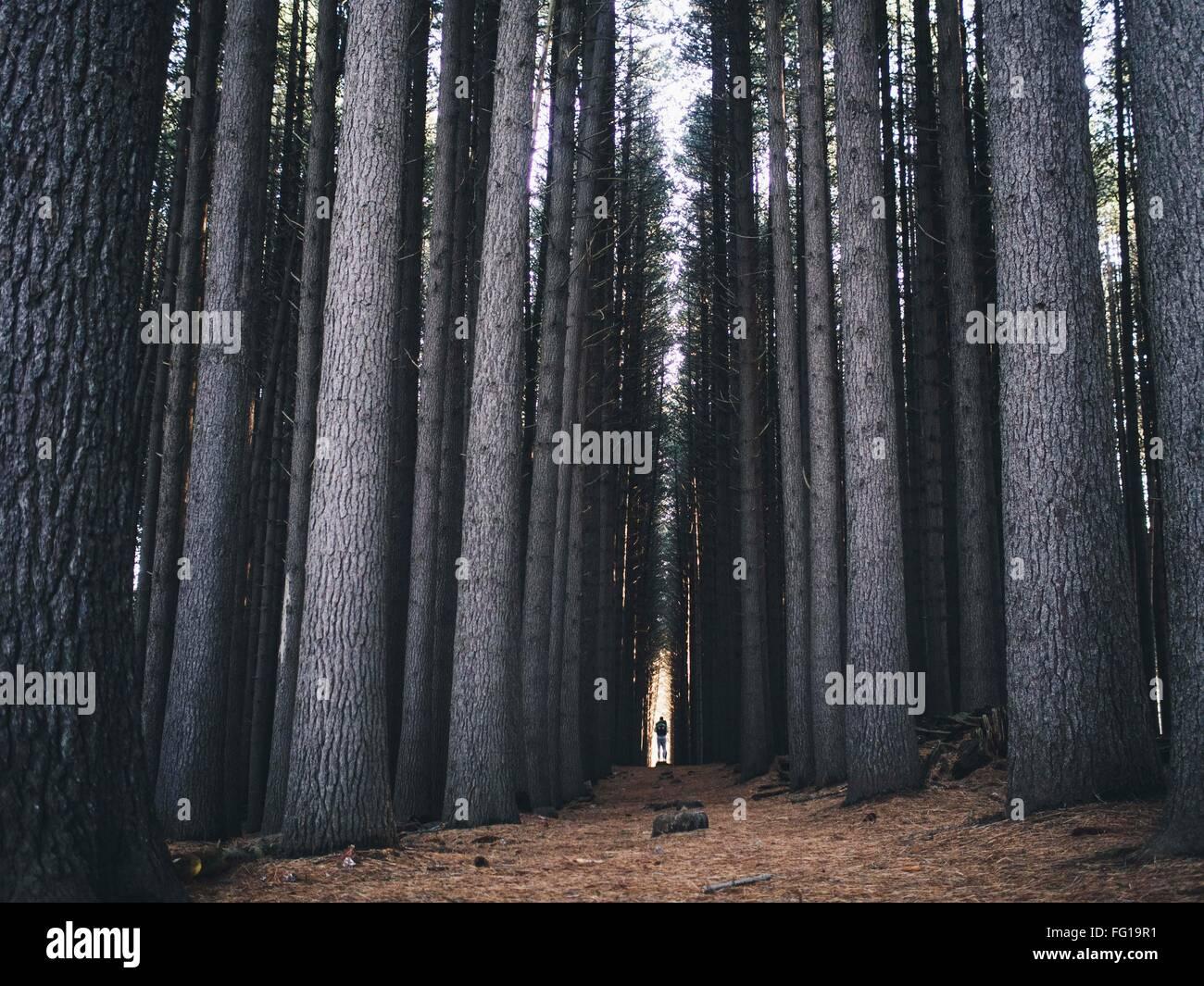 Vue sur les arbres dans la forêt Photo Stock