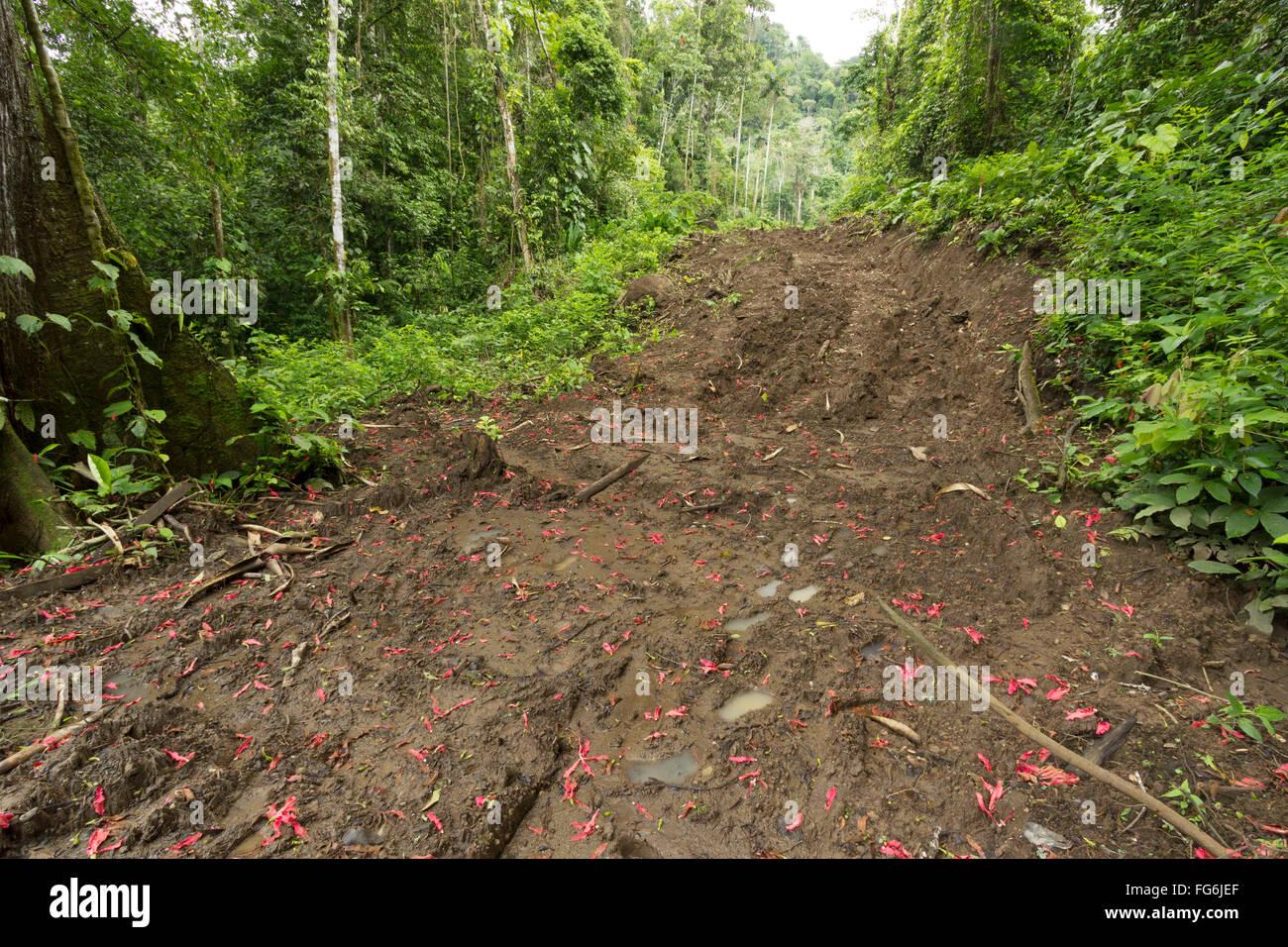 Nouvelle route rasées par rainforest en Equateur. La construction de routes et le déboisement de la colonisation Photo Stock