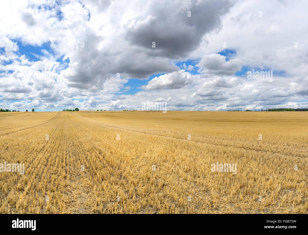 Grand champ de chaumes, qui s'étend aux arbres à l'horizon, avec d'impressionnants à Photo Stock