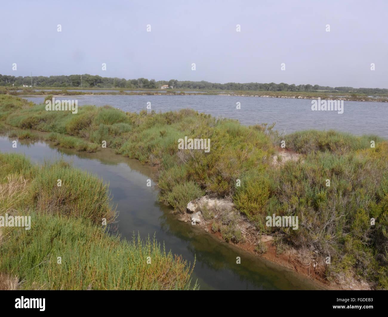 Voir des zones côtières Salines, Es Salobrar de Campos, Majorque, Îles Baléares, Espagne, Juin Photo Stock