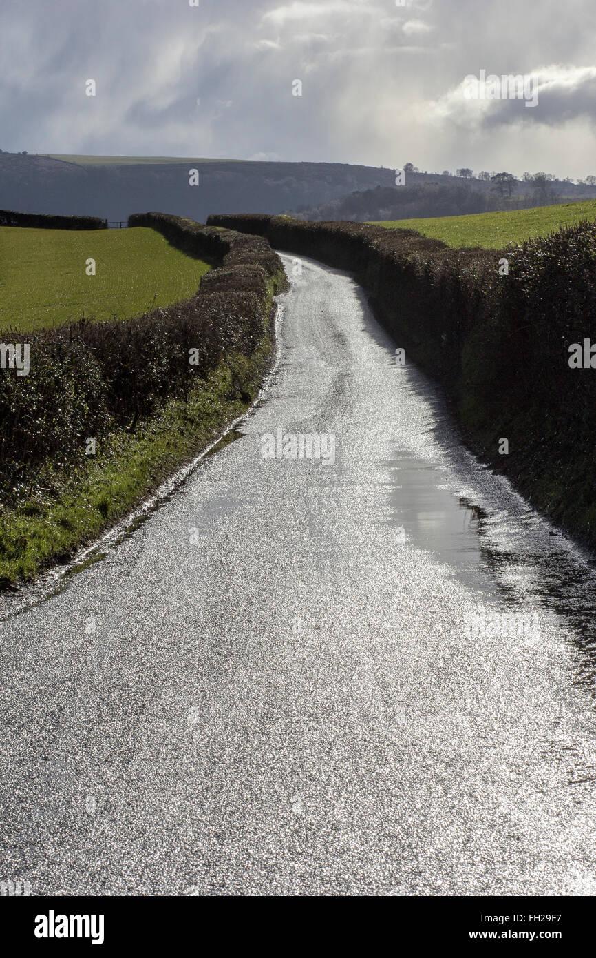 Devon vide lane, vert, voie unique, Absence, image en couleur, le jour, la Direction, la route vide, l'Angleterre, Photo Stock