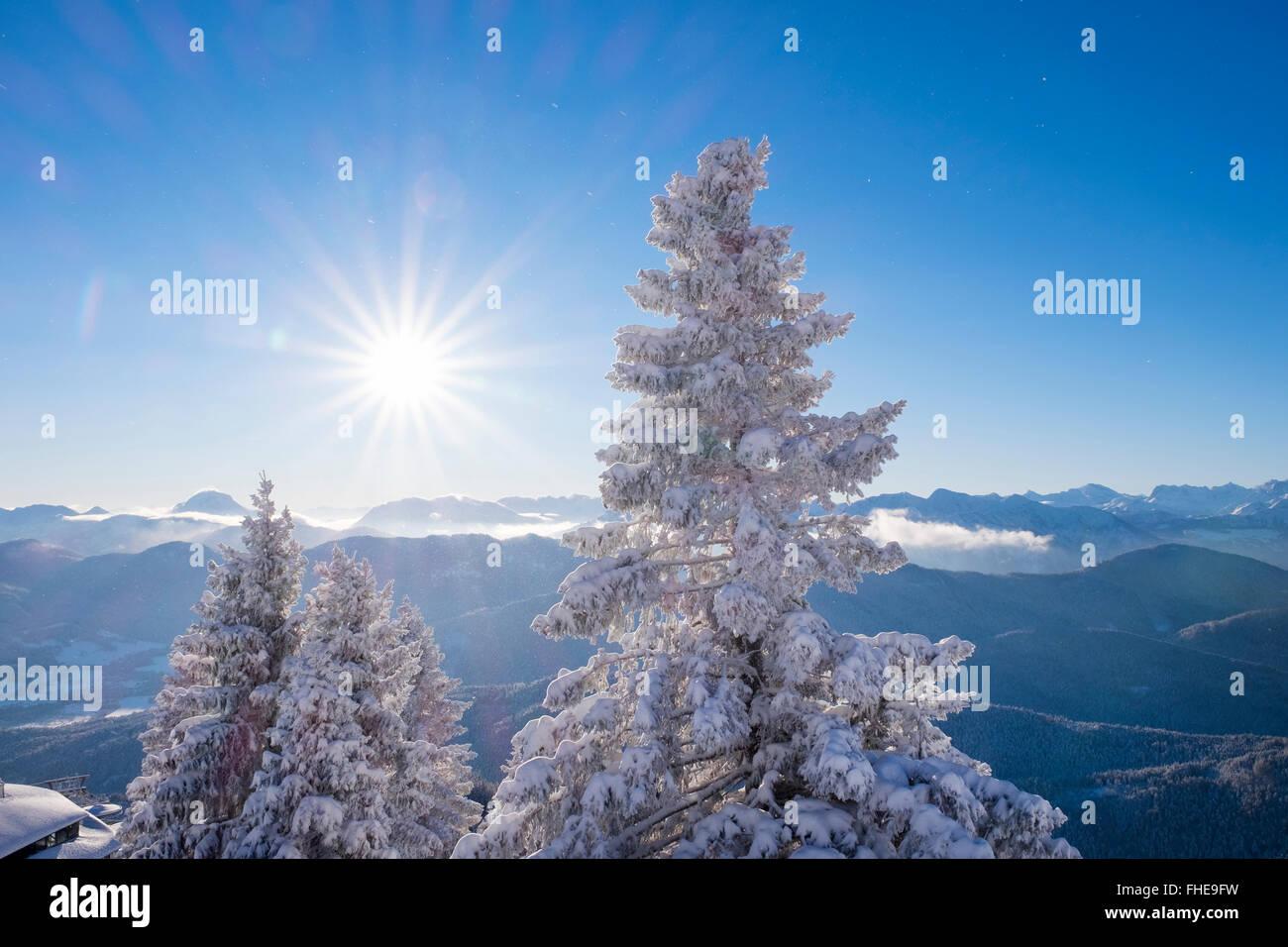 L'Allemagne, la Haute-Bavière, Lenggries, vue de Brauneck avec sapins couverts de neige Banque D'Images