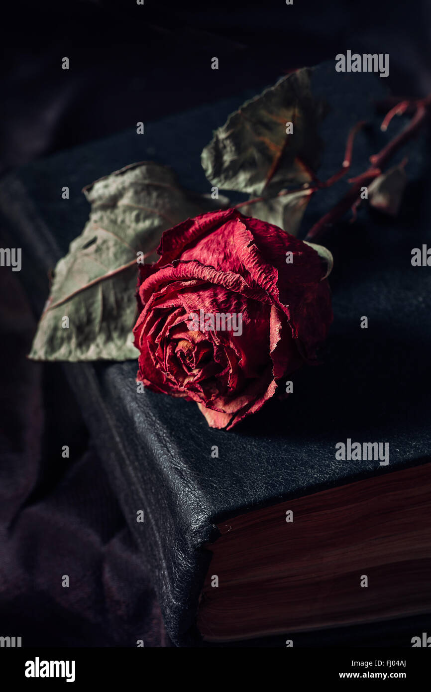 Une rose sèche Photo Stock