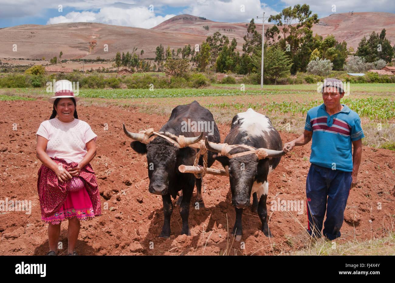 L'homme et la femme en costume traditionnel avec deux stots à des travaux sur le terrain, le Pérou, Photo Stock