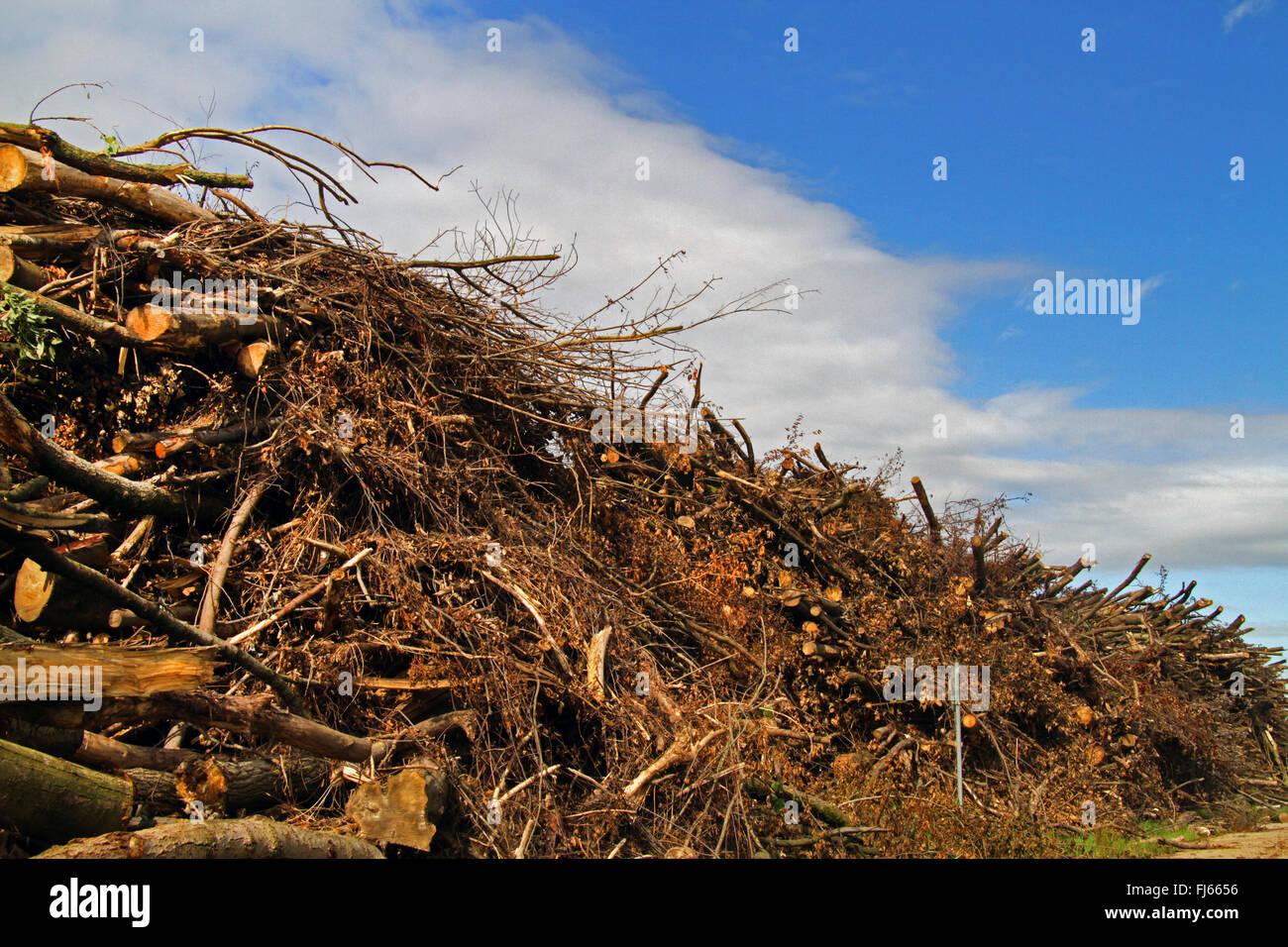 Le stockage du bois après le déboisement, Allemagne Photo Stock