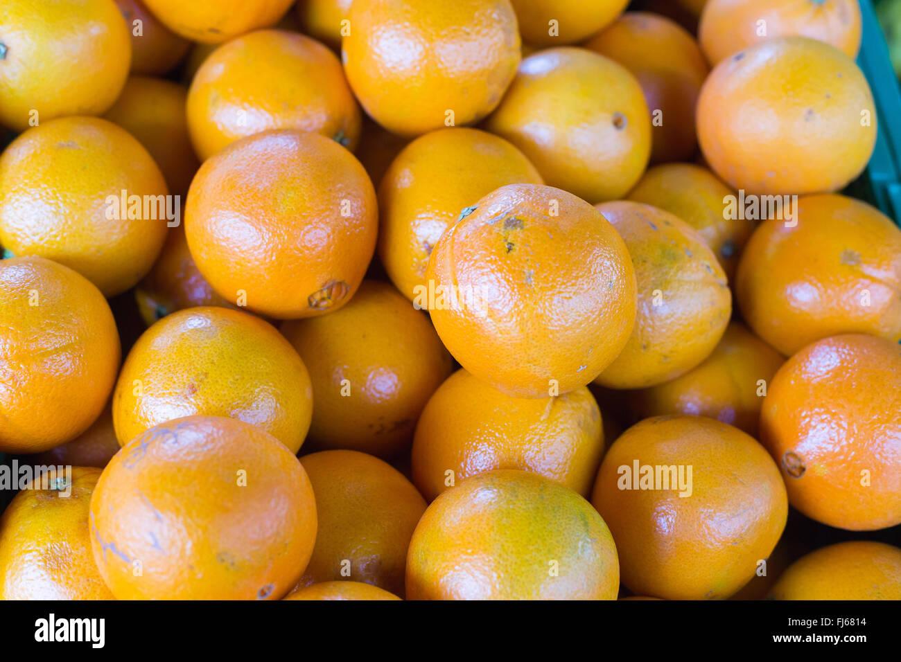 mandarin , orange, couleur orange, couleur, fruits, fruits , marché
