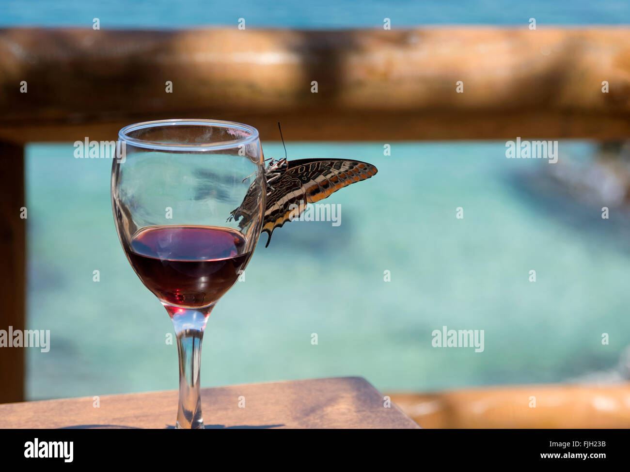 Curieusement l'inspection d'un verre papillon Photo Stock