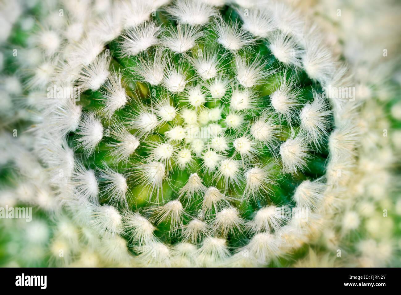Plantes et arbres: cactus, close-up, motif floral abstrait Photo Stock