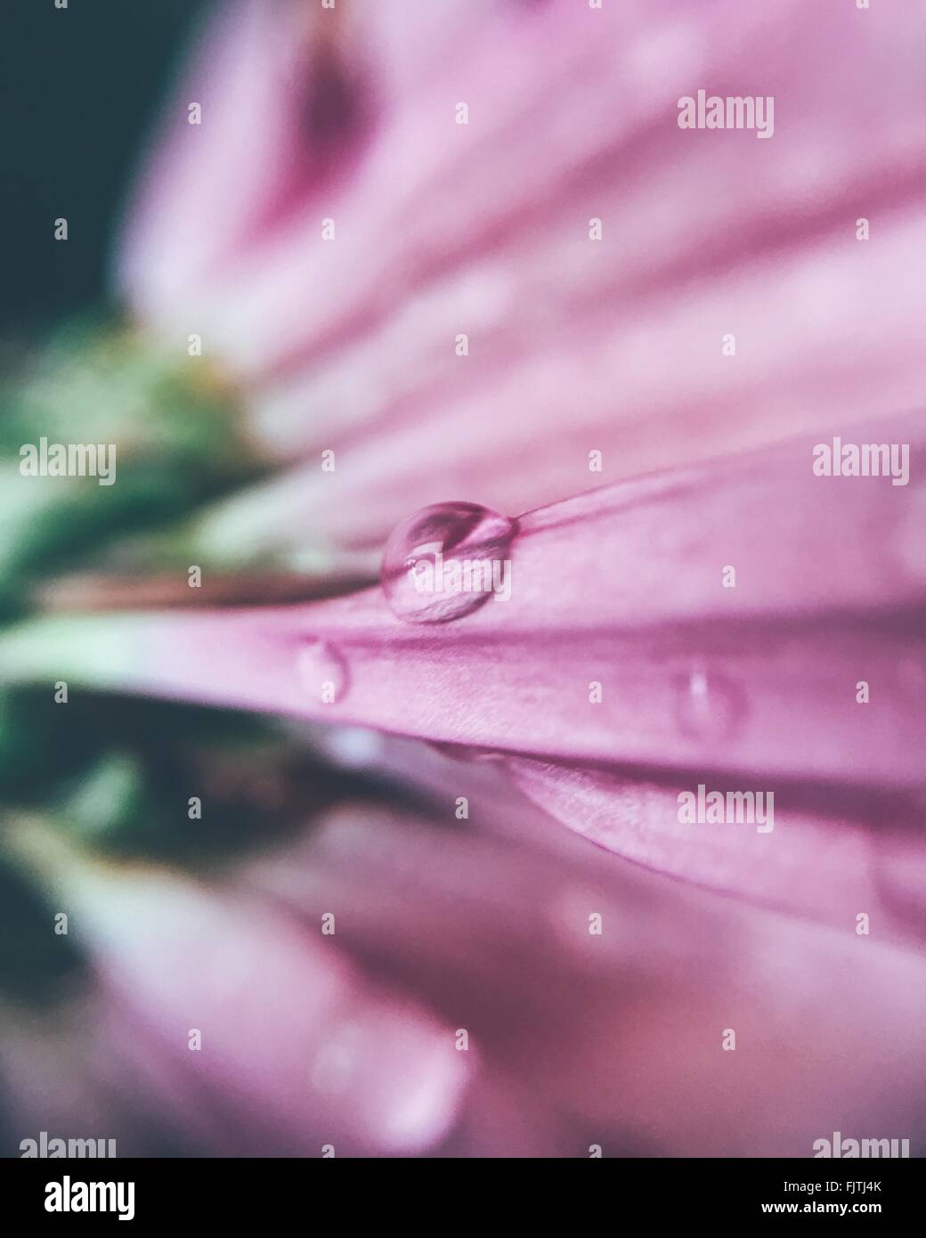 Detail Shot de gouttes sur fleur Photo Stock