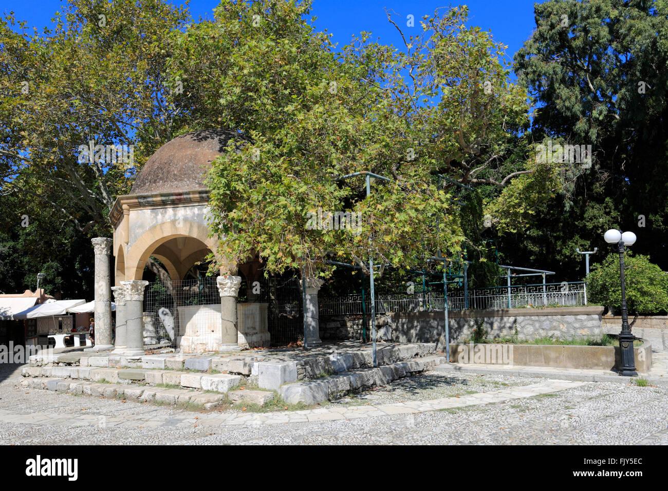 le platane d'hippocrate, planté par hippocrate, arbre plan carré