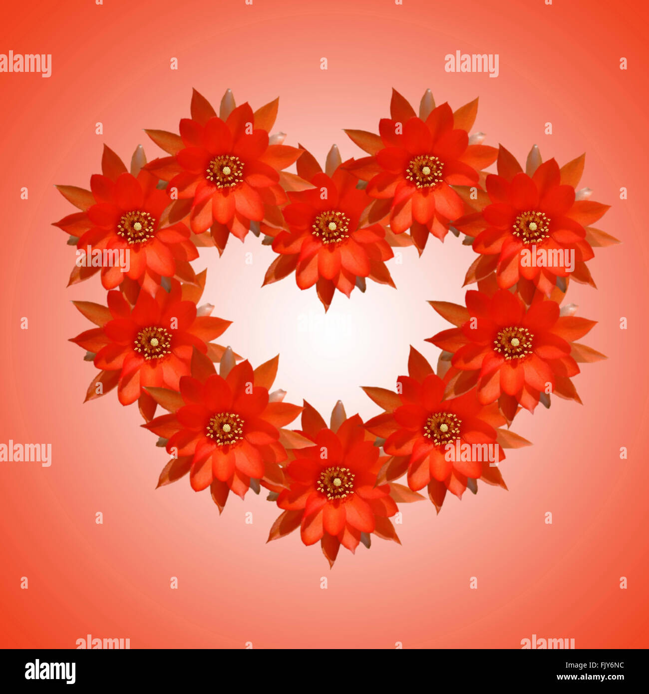 Origines de fleurs Saint-valentin carte Photo Stock