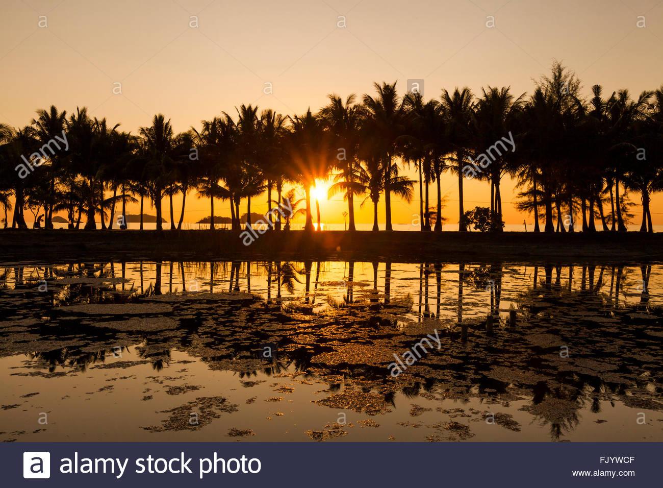 Des cocotiers sur la plage de sable de l'île tropicale. Koh Chang. La Thaïlande. Photo Stock