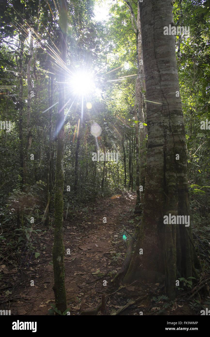 Sentier de randonnée dans la forêt amazonienne Photo Stock
