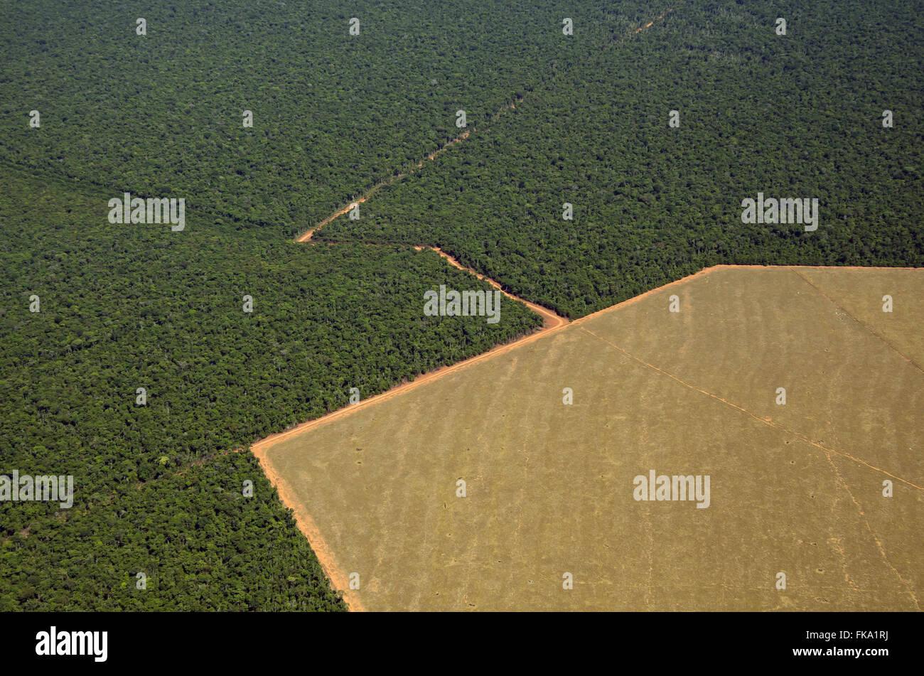 Vue aérienne de la zone préservée et zone déboisée pour limiter l'agriculture dans le milieu de la Savana Banque D'Images