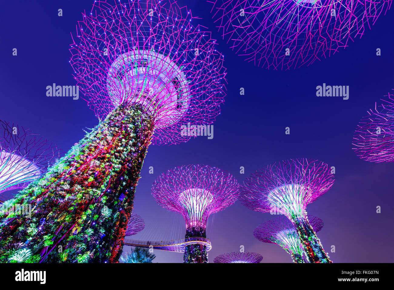 Jardins à Supertrees par la baie de Singapour. Photo Stock