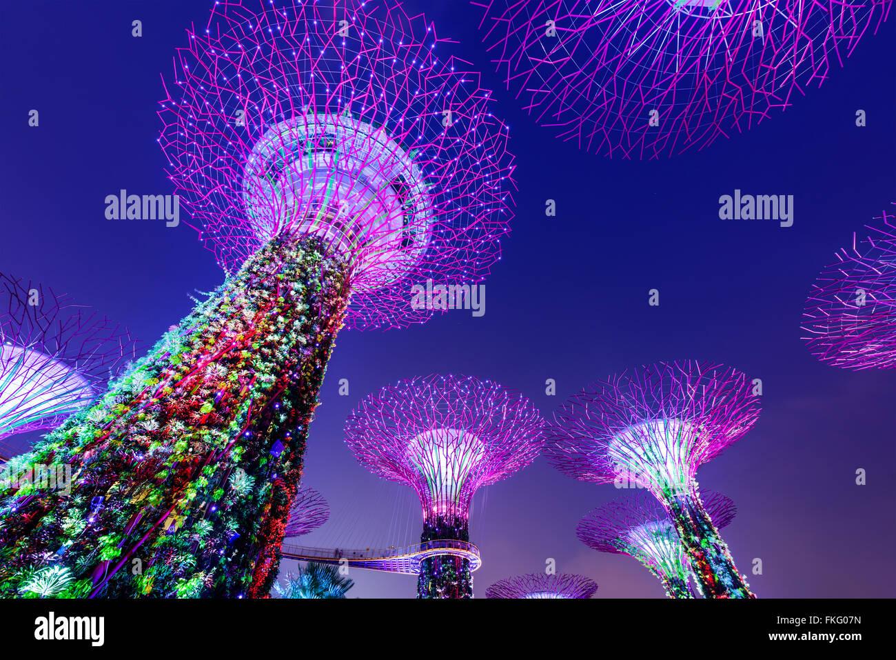 Jardins à Supertrees par la baie de Singapour. Banque D'Images