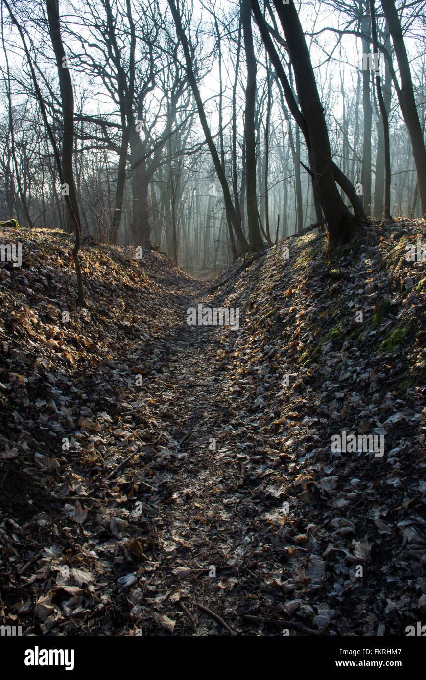 Un chemin forestier dans un bois en Saxe-Anhalt, Allemagne Photo Stock