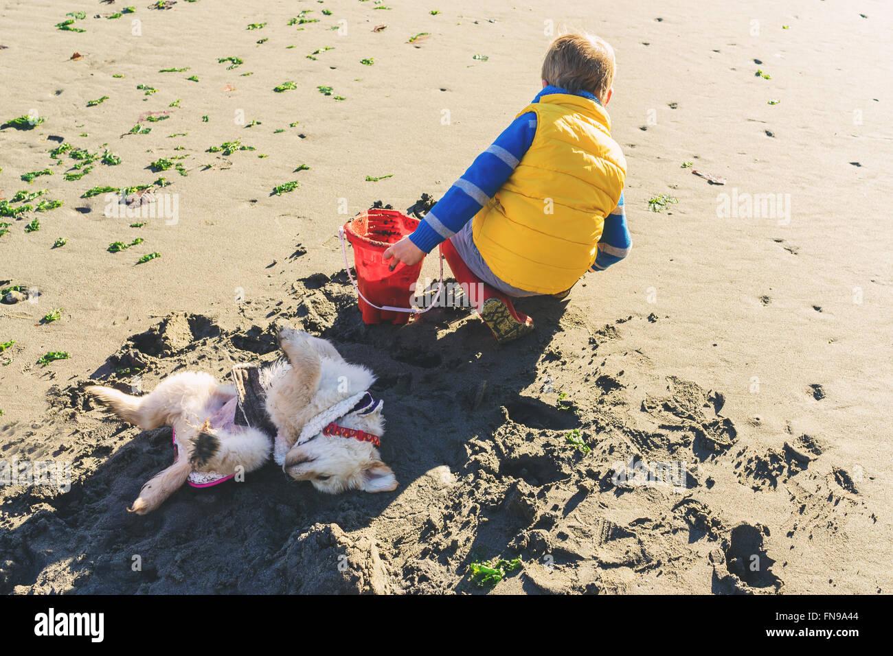 Garçon de creuser sur plage avec chien matériel roulant dans le sable Photo Stock