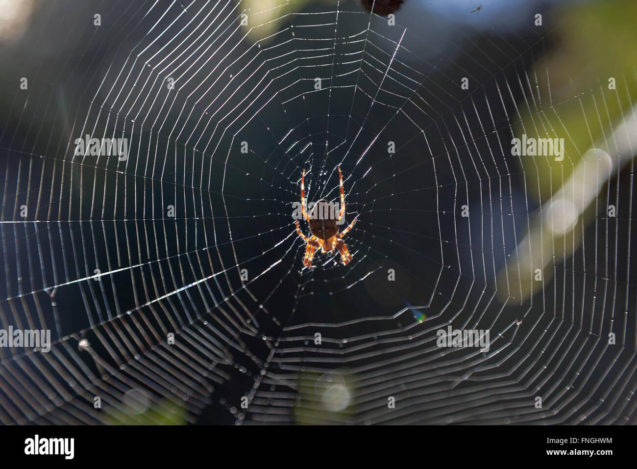 Spider's Web dans le jardin Photo Stock