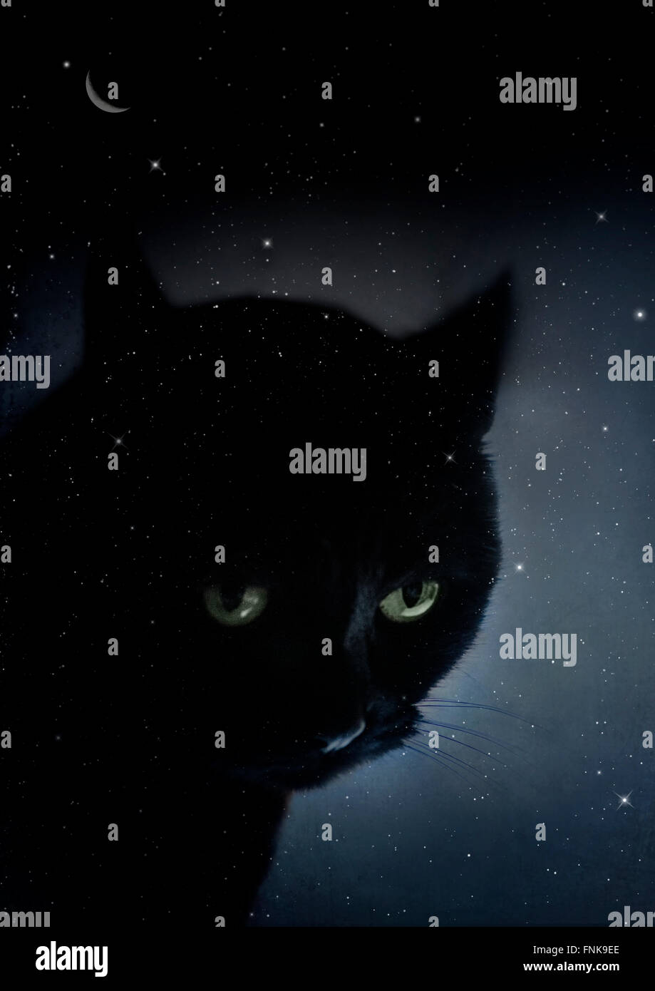 Chat noir dans la nuit étoilée Photo Stock